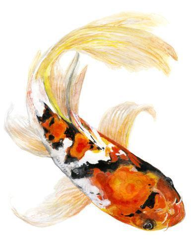 Koi fish prints ebay for Japanese koi carp paintings