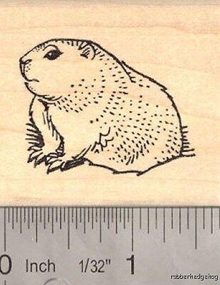 Groundhog Day Rubber Stamp  E15808 WM wildlife, winter](Groundhog Day Crafts)