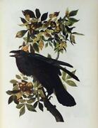 1937 Audubon