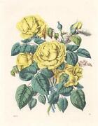 Kupferstich Pflanzen