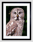 Owl Framed Decorative Posters