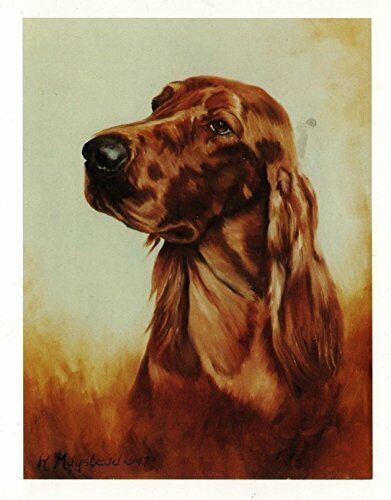 Irish Setter Head Study Notecards Set 12 Note Cards By Ruth Maystead Made in USA