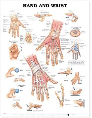 Hand And Wrist Orthopedics Anatomy Poster Anatomical Chart Company