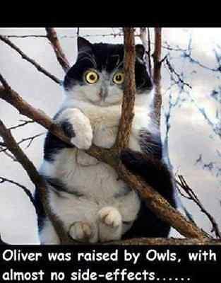 "Funny Cat  refrigerator magnet 2 1/2x 3 1/2"""