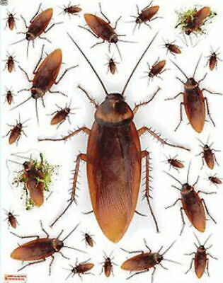 COCKROACH wall stickers 29 decals bugs insects window clings Halloween props](Halloween Vinyl Clings)