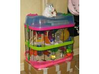 Hamster and cage free to a good home!