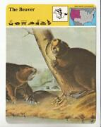 Safari Animal Cards
