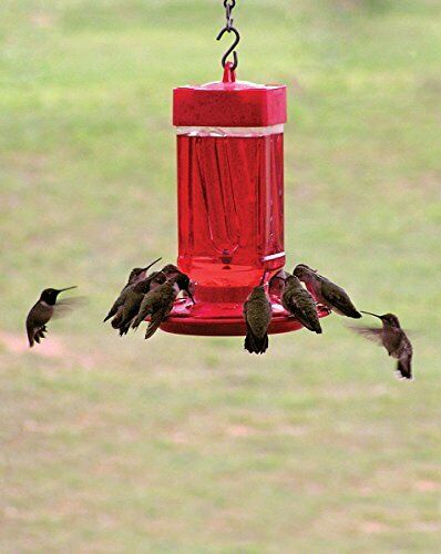 FIRST NATURE 32 oz. HUMMINGBIRD FEEDER, #3055, All Plastic, MADE IN USA       dm