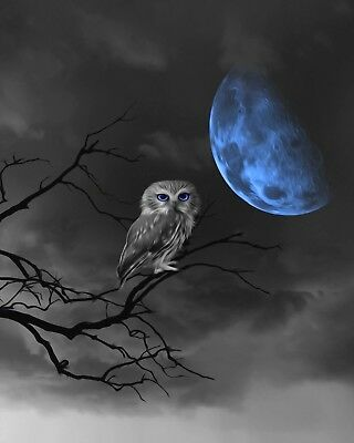 Black White Blue Moon Owl On Tree Branch Home Decor Wall Art Matted Picture