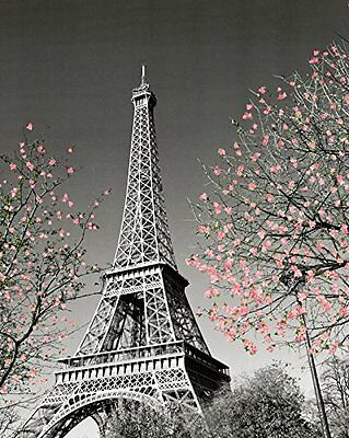 Paris Eiffel Tower Blossoms Decorative Photography Travel City Poster Print New