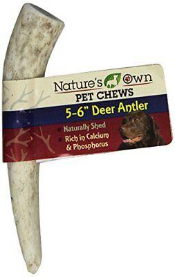 Best Buy Bones395047 Amer Reg Deer Antler Bulk for Pets, 5-6-Inch (Buy Deer Antlers)
