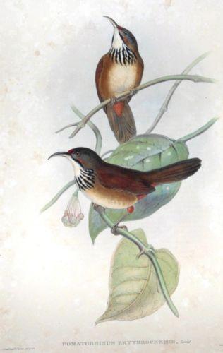 John Gould's $81,000 Birds of Europe book perches at top of Cambridge auction