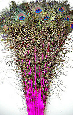 Peacock Feather Costume Tail (100 Pcs DYED PEACOCK Tail Feathers 40-45