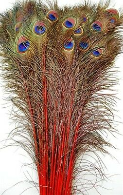Peacock Feather Costume Tail (25 Pcs DYED PEACOCK Tail Feathers 40