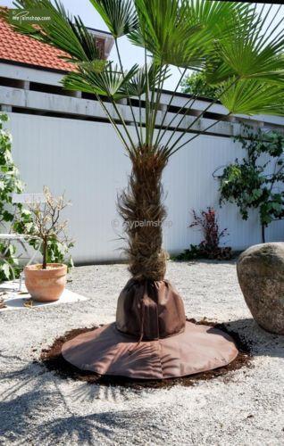 palmen winterschutz jetzt online bei ebay entdecken ebay. Black Bedroom Furniture Sets. Home Design Ideas
