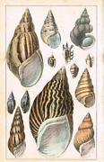 Antique Shell Art