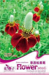 Coneflower Seed 30 Meringue Coneflower Echinacea Flowers