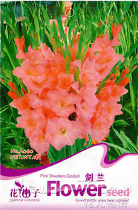 Details about Lavender Seed ★ 2 Flowers Seeds Gladiolus Bulbs Seeds