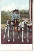 Dog Pull Wagon