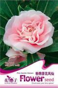 Camellia Seeds