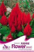 Perennial Flower Seeds
