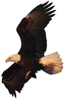 AMERICAN BALD EAGLE Flying Bird - BIG Window Cling Decal Sticker - NEW