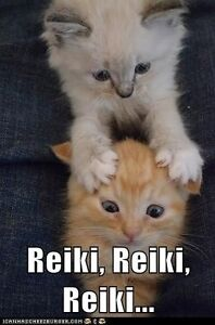 Reiki healing for your pet