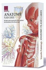 Anatomy Flash Cards (Cards)