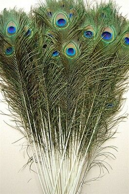 Peacock Feather Costume Tail (10 Pcs PEACOCK TAILS Natural Feathers 45-50