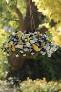 Trailing Flower Seeds