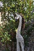 Zebra Figur