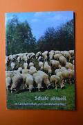 Ziegen Schafe