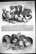 Poultry Print