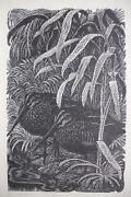 Tunnicliffe Prints