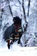 Horseware Amigo