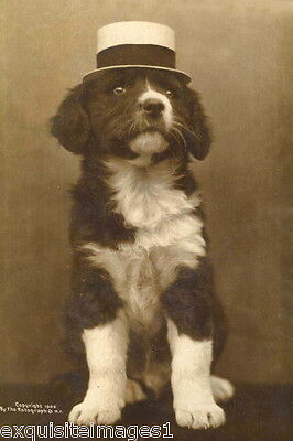 1906 B&W Photo~Border Collie Puppy Dog Wearing Hat~ NEW Large Note Cards
