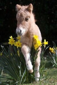 Easter Horse Camps
