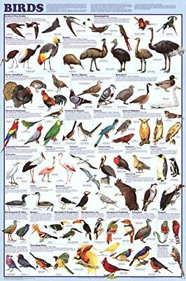 Birds Educational Science Chart Poster 24 x 36