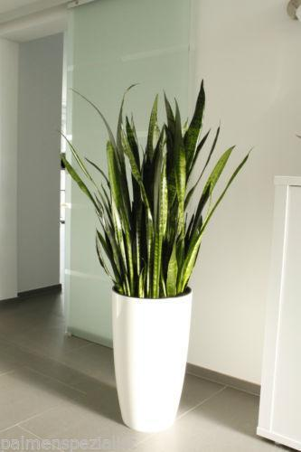 pflanzen g nstig online kaufen bei ebay. Black Bedroom Furniture Sets. Home Design Ideas