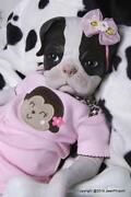Reborn Puppy