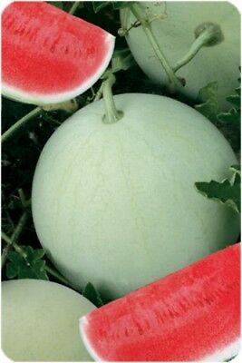 Watermelon SNOWBALL Seeds organic seeds non-GMO seeds Ukraine 3 g Garden idea - Watermelon Ideas