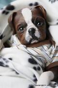 Reborn Dog