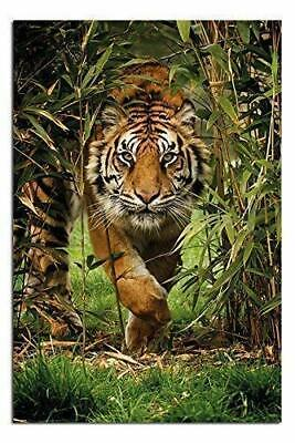 bamboo tiger poster 24 x 36 inches
