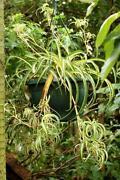 Live House Plants