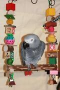 Large Parrot Toys