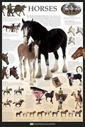 Horse Posters