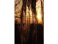 1080x730mm Canvas Print, Sunset by Pampas Grass