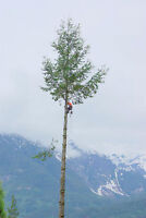 Tree Removals - Hire an Arborist Today for Cheap!