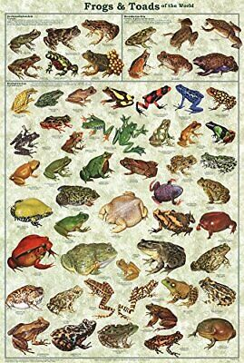 Frogs & Toads of the World Educational Science Classroom Chart Poster 24x36