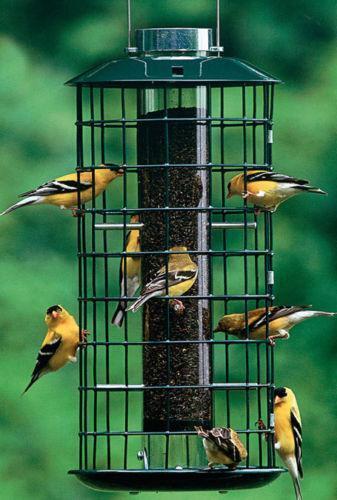 Duncraft Bird Feeder Ebay